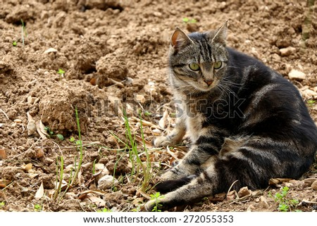 Chubby brown cat with big green eyes lying in the garden. Natural light, selective focus. - stock photo