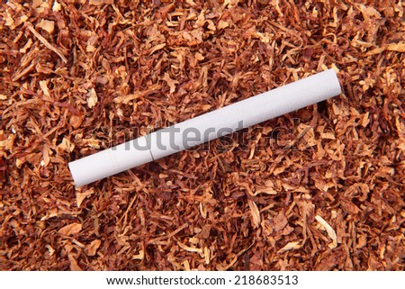 Cigarette close-up on a background of a lot of tobacco - stock photo