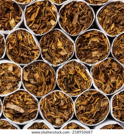 Cigarettes macro shot - stock photo