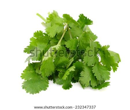 Cilantro herb isolated on white background  - stock photo