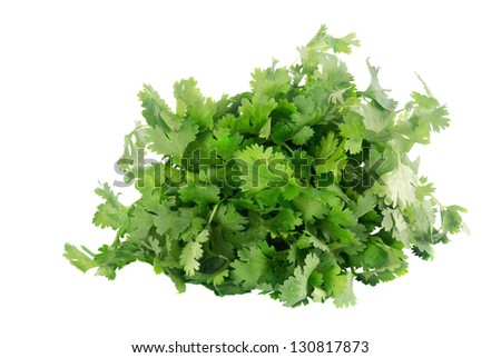 cilantro isolated on a white background. AKA chinese parsley, coriander and dhania. - stock photo
