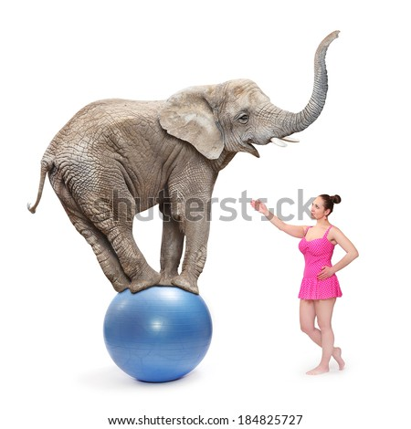 Circus clown girl and elephant balancing on a blue ball. - stock photo