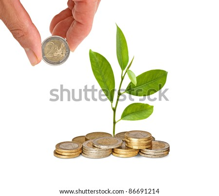 Citrus sapling  growing from pile of coins - stock photo