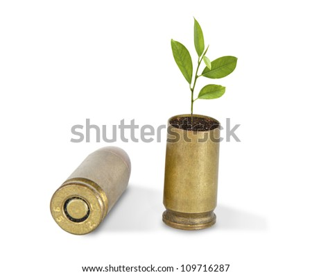 Citrus sapling growing from shells - stock photo