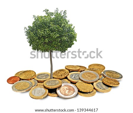 Citrus tree growing from coins - stock photo