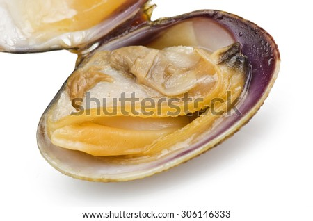Clam open cooked close up on the white - stock photo