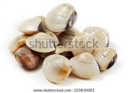 clams - stock photo