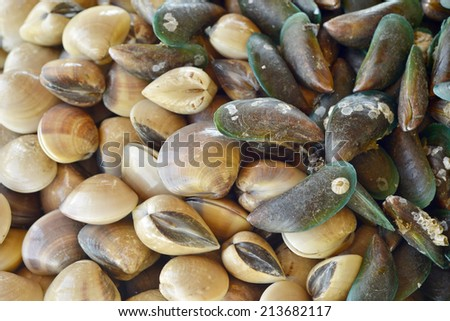 Clams and mussel texture background - stock photo