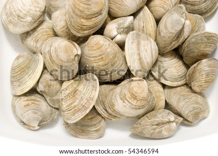 clams being soaked in water before dinner - stock photo