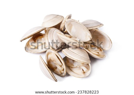 clams isolated on white background - stock photo