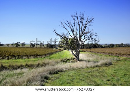 Clare Valley Vineyard in Adelaide - stock photo