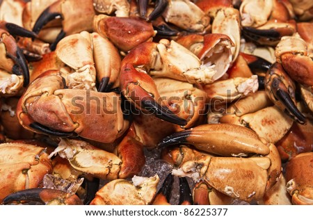 Claws of a huge crab. The fish market. Bergen. Norway. - stock photo