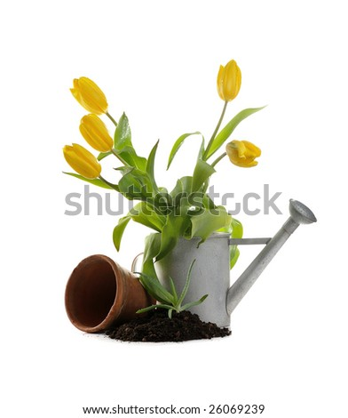 clay pot, iron watering can, soil, seedling, tulips on white background - stock photo