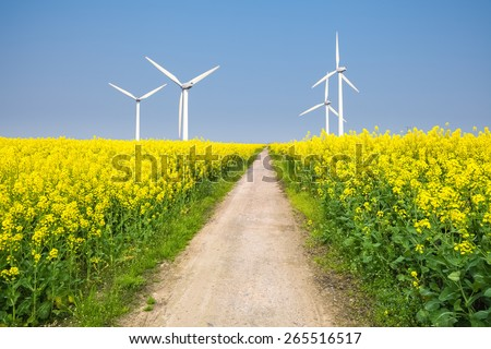 clean energy in the spring, beautiful rape flowers were yellowing the fields with wind farm - stock photo