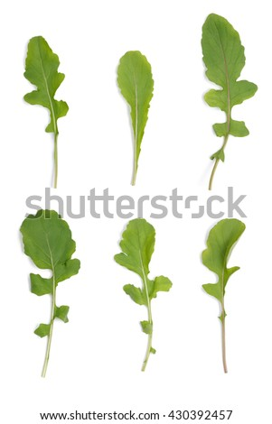 Clean ruccola leaves on white background - stock photo