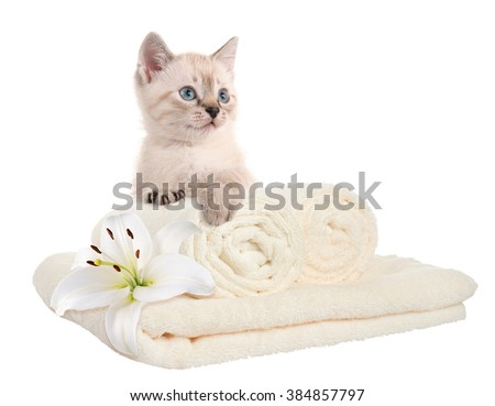 Clean towels and kitten. Home comfort. isolated - stock photo