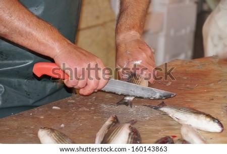 cleaning fresh fish  - stock photo