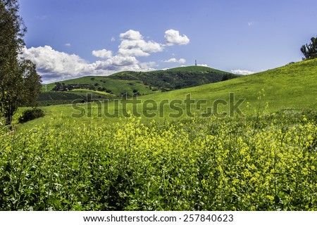 Clear blue sky and clouds with meadow/Peters Canyon.Mid morning at Peters Canyon at Orange California  - stock photo