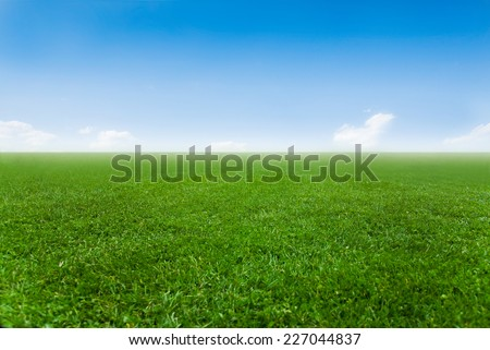 Clear blue sky over green field. - stock photo