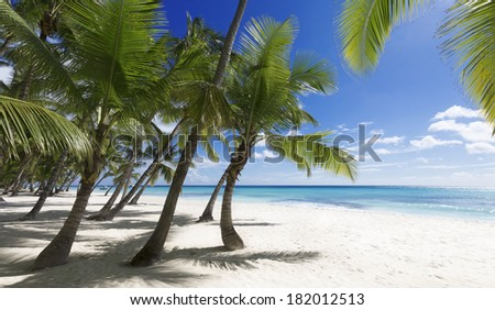 Clear blue water, sand and palm trees. Excellent place for water sports, treatment and rest. - stock photo