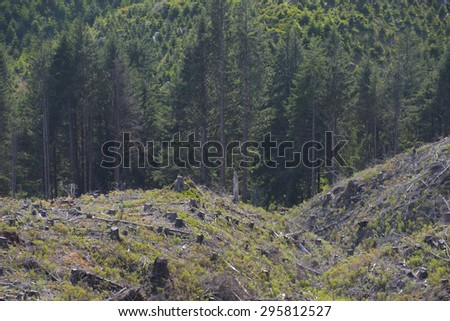 Clear cut forest, signs of reforestation, coastal Oregon. - stock photo