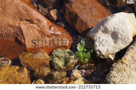 Clear sea water, algae and stones on the floor, low-tide time - stock photo
