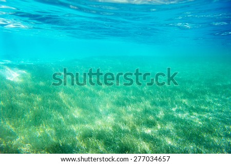 Clear water and sea grass underwater - stock photo