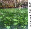Clear waters of Wekiwa Springs State Park in central Florida - stock photo