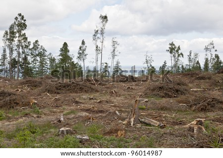 Clearcutting area in boreal forest - stock photo