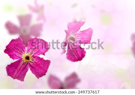 clematis ,summer flower, tender flowers copy space gardening, - stock photo