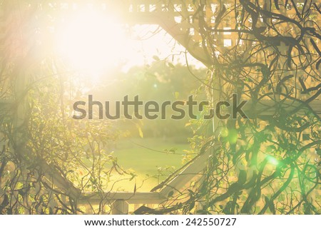 Climber vine plant stems intertwine with white wicker trellis with an opening window and sun rays or sun flare in garden indicating hope birth future happiness life divinity with retro vintage filter - stock photo