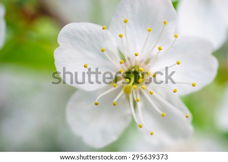Close look at white flower - stock photo