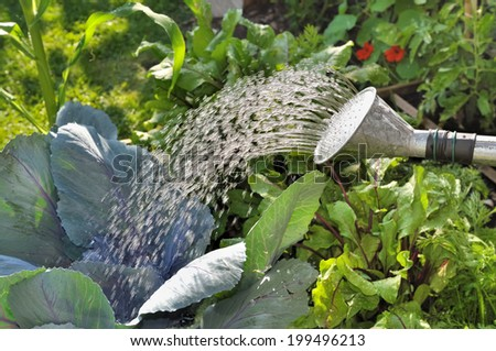 close on water outgoing from a watering can in a vegetable garden  - stock photo