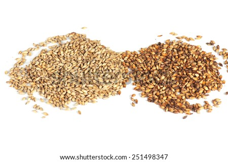 Close photo up of malt grains - stock photo