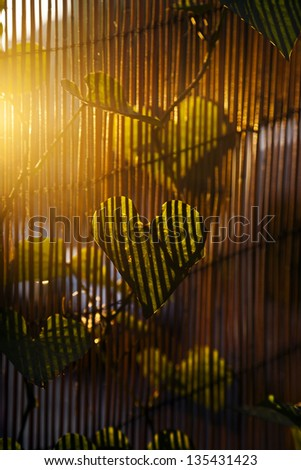 Close up at a heart shaped leaf of a climber plant on blurred bamboo fence background, which in turn casts stripes of shadow on the leaf, lit by dusk yellow sun. - stock photo