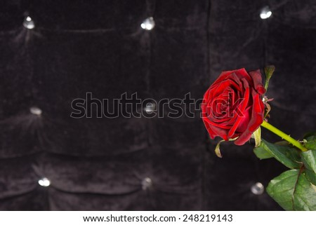 Close up Attractive Single Red Rose Flower with Sparkling Foam Background - stock photo
