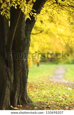 close up autumn trees in park - stock photo