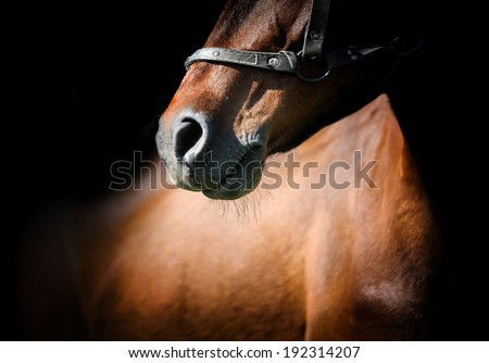Close-up beautiful horse head isolated on black background - stock photo