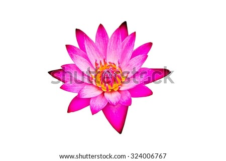 Close-up Beautiful Pink Lotus Flowers.Isolated - stock photo