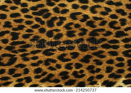 Close up black leopard spots texture design - stock photo