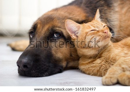 close up, cat and dog together lying on the floor - stock photo
