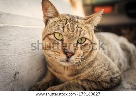 Close up cat, Animal portrait - stock photo