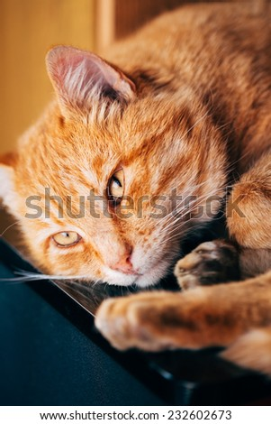 Close up Cat, Little Red Striped Kitten Sleeping On Bed - stock photo