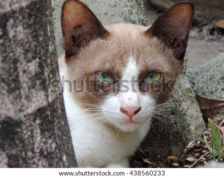 Close-up cat looking with curious.           - stock photo