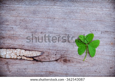 Close Up clovers leaves setup on rustic wooden background. - stock photo