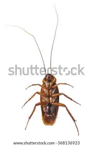 Close up cockroach isolated on white - stock photo