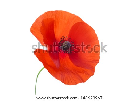 Close-up Corn Poppy (papaver rhoeas) On White with Clipping Path - stock photo