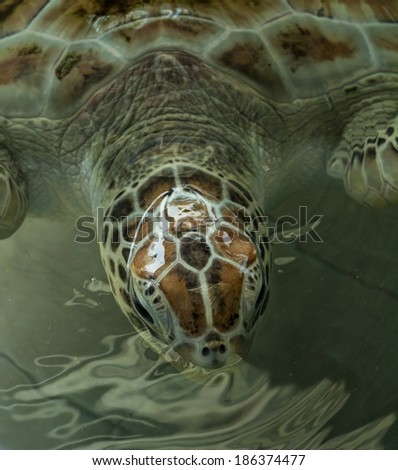 Close up crop of Sea Turtle's - stock photo