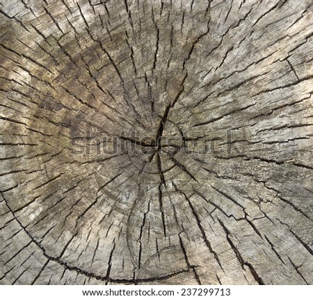 close-up cross section of tree trunk as a wooden background - stock photo