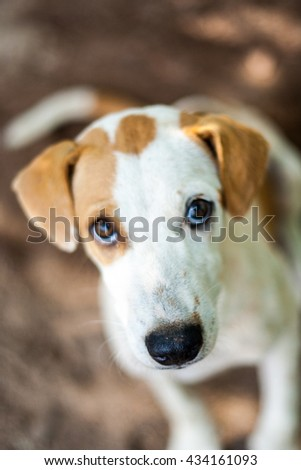 Close up cute dog. He is looking at camera. focus at nose.  - stock photo